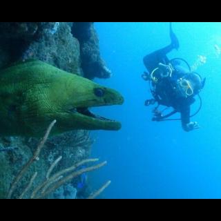 padi fish identification specialty Poseidon Dive Center PADI