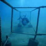 padi peak performance buoyancy Poseidon Dive Center PADI