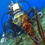 padi digital underwater photography specialty Poseidon Dive Center PADI