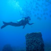 padi deep and nitrox specialty poseidon dive center padi