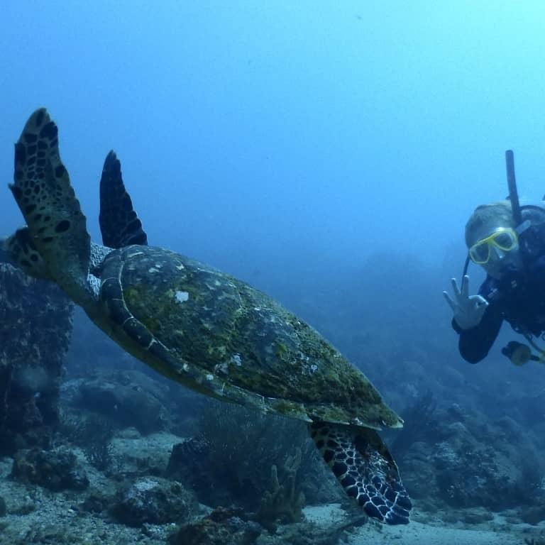 Diving tayrona park colombia 2-Tank-Dive Poseidon Dive Center PADI