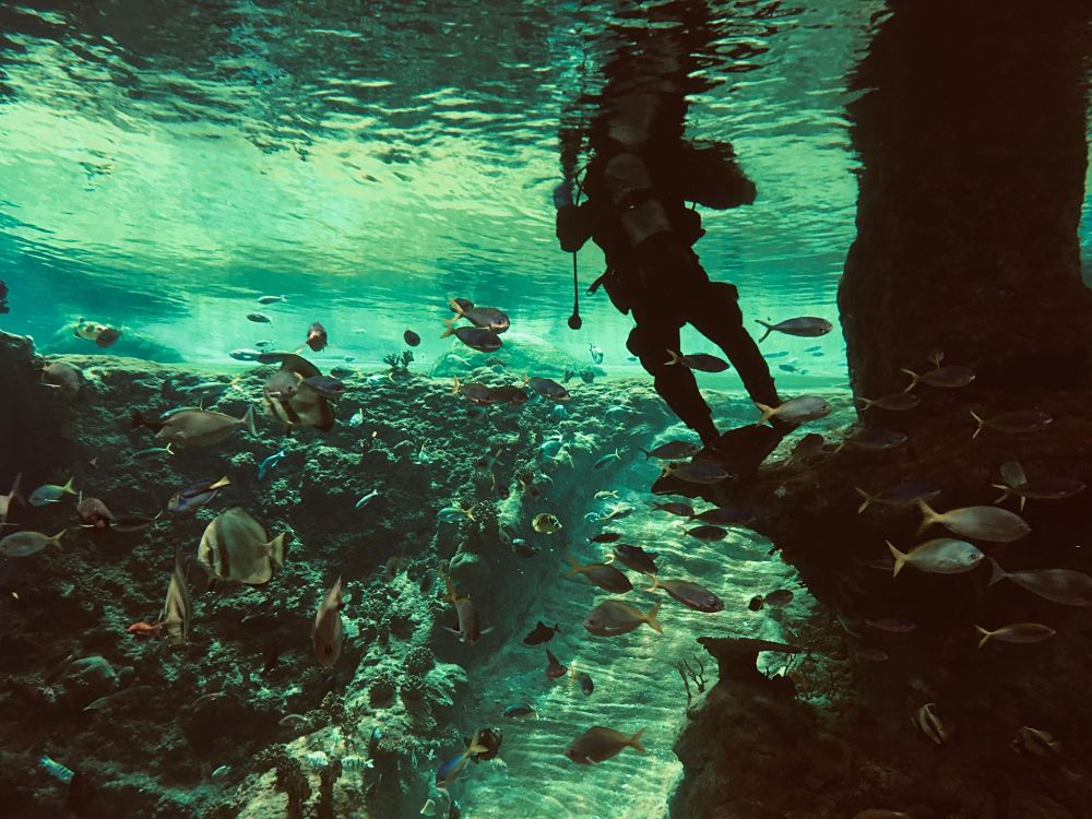 PADI Diving courses poseidon dive center padi