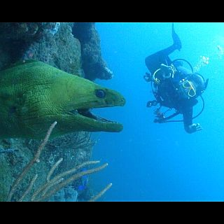 Fish-PADI-Specialty-Courses-PADI-Cursos-Especialidades-PADI-Spezialkurse-poseidon-dive-center-padi