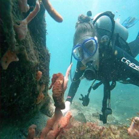 diving-tayrona-park-bucear-parque-tayrona-fun-dive